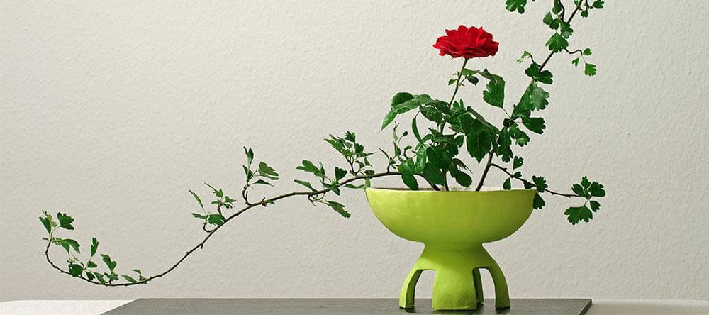 Visa dina växter i intressanta vaser på traditionellt sätt