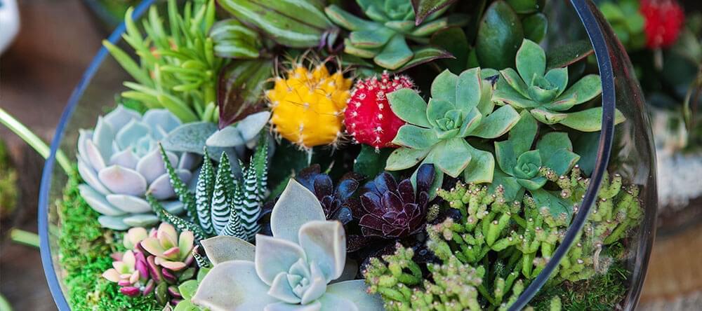 Det finns ett lättskött alternativ: mossa och kaktusar ger vackra landskap