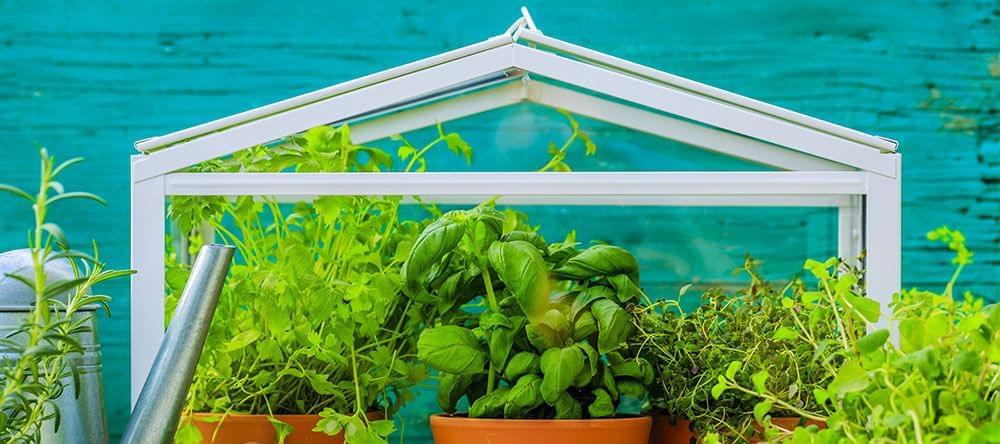 Mini-serres voor je woning zijn zowel geschikt voor kruiden als voor decoratieve landschappen met bloemen