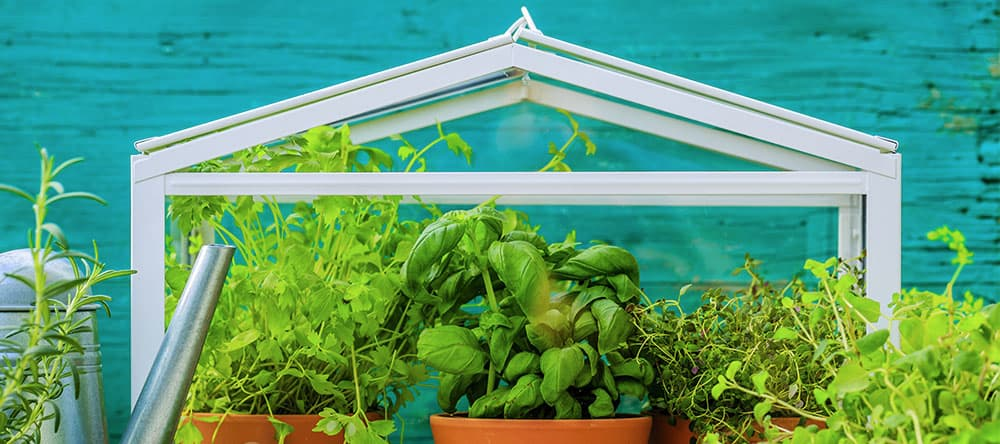 Mini-Gewächshäuser für die Wohnung eignen sich für Kräuter oder dekorative Blumen-Landschaften