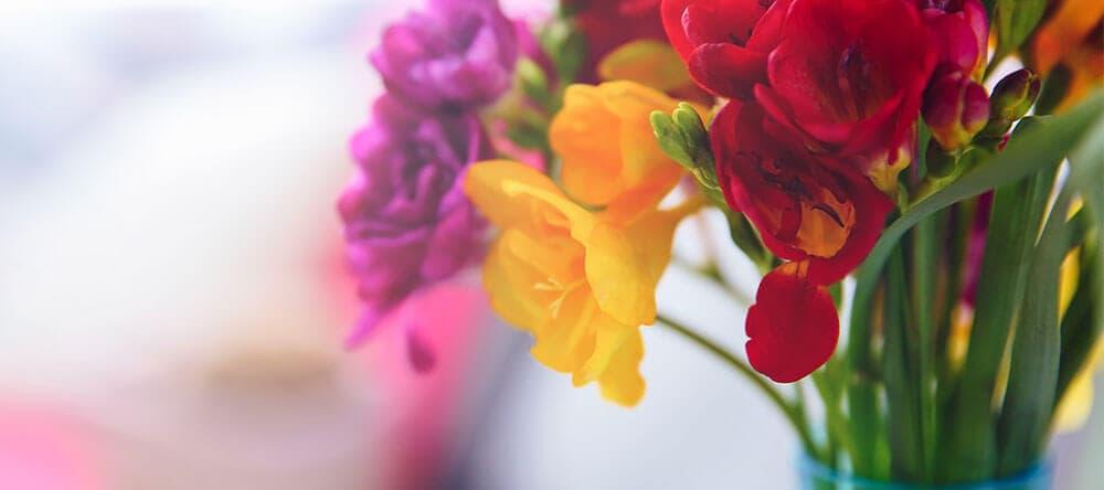 Teste Farbkombinationen aus Topfpflanzen und Schnittblumen