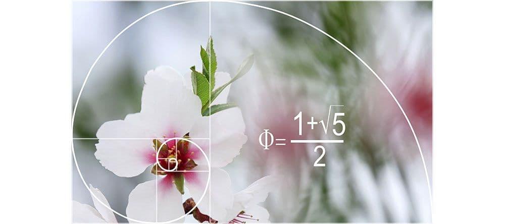 Caption: Aus der Mathematik bekannt: Die Spirale des goldenen Schnitts beeinflusst unser Schönheitsempfinden.