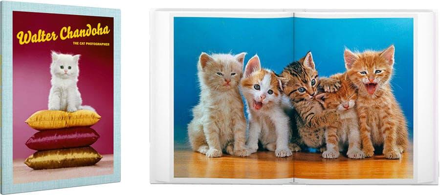 Foto mit Katze