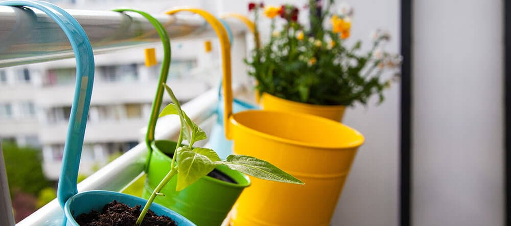 Pflanzen und Kräuter sehen nicht nur toll aus, sondern verbreiten auch einen herrlichen Duft