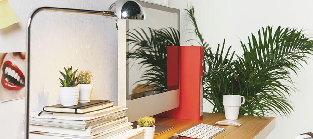 No minimices la importancia de las plantas de interior, ya que ellas son importantes para el cuerpo y para la mente.