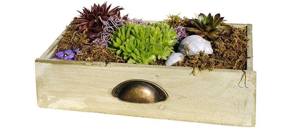 Plantas de interior de fácil cuidado: añade verde a tu vida de nuevo en 2017 gracias a las suculentas.