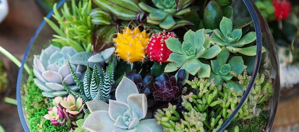 Los invernaderos también pueden ser fáciles de mantener: con musgo y cactus puedes conseguir un bonito paisaje